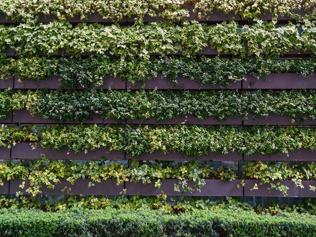 我が家の断熱性向上に最適?壁面緑化を成功させるコツを学ぼう!
